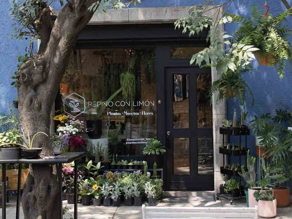 Pepino con Limón, la tienda de plantas más cool en la Juárez y Condesa