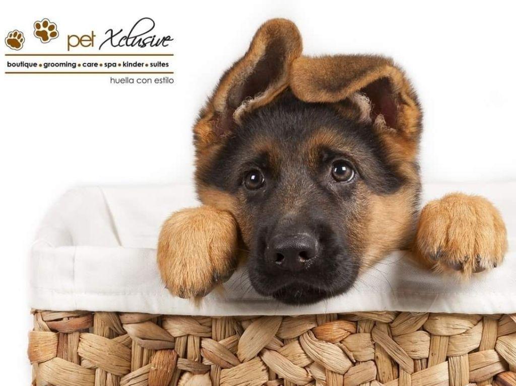 Consiente a tu mascota en Pet Xclusive