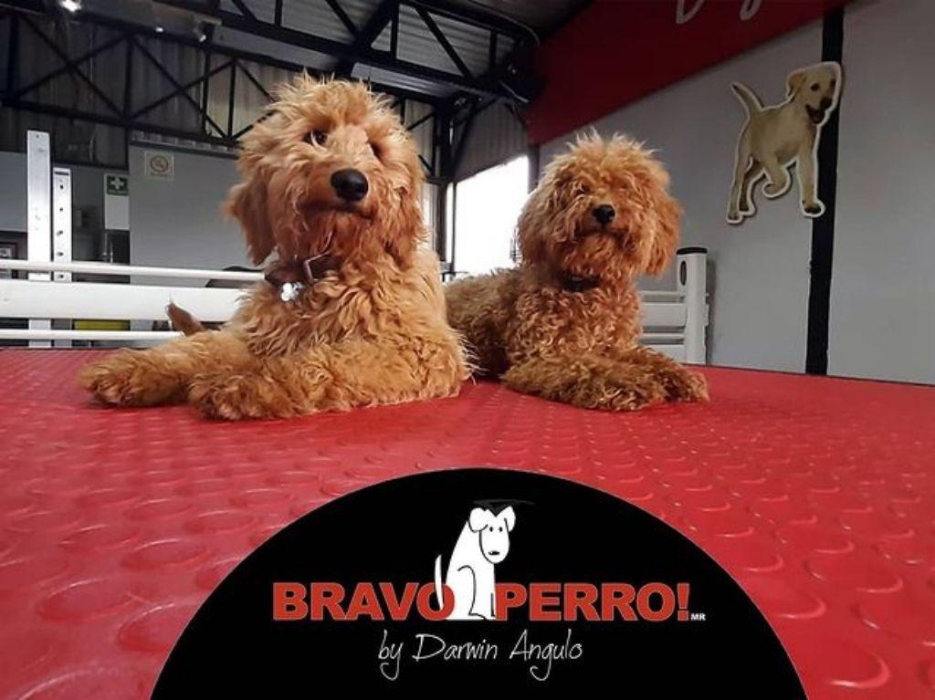 Bravo Perro Fitness: el mejor gimnasio para tu mascota