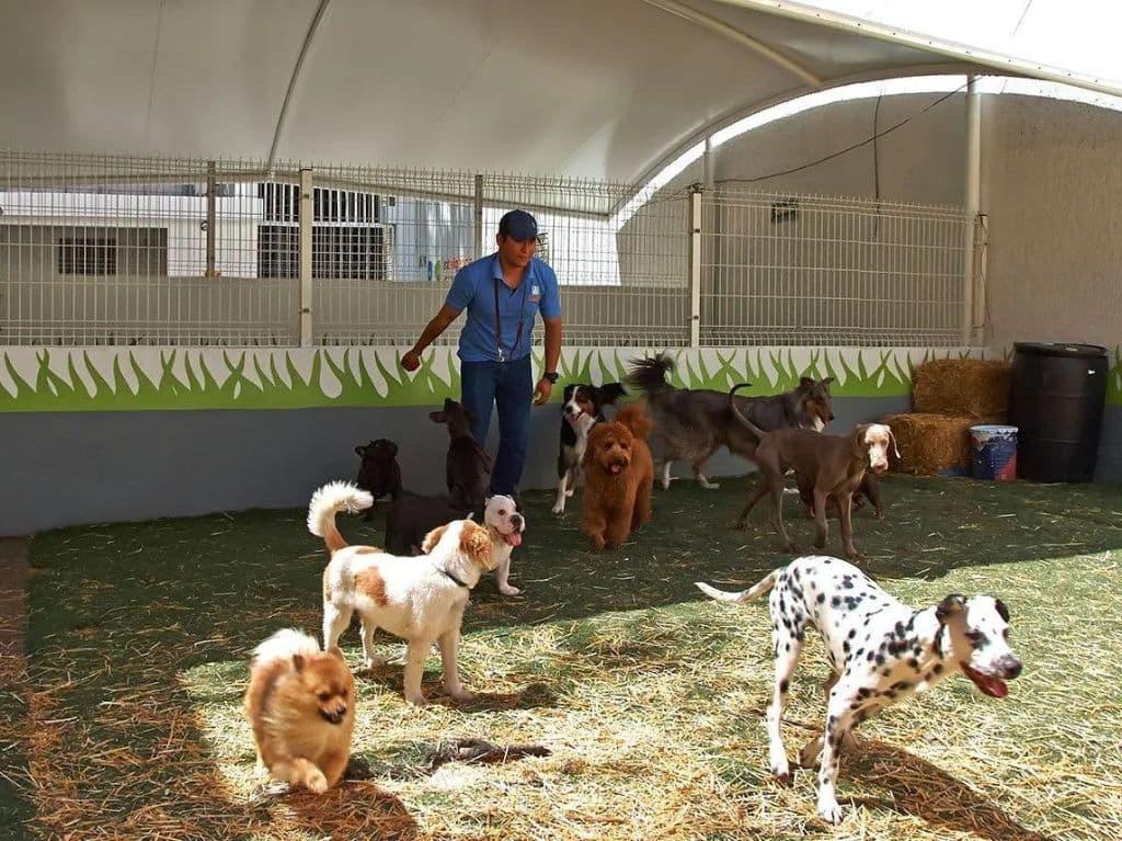 Inteligencia Canina, escuela para perros