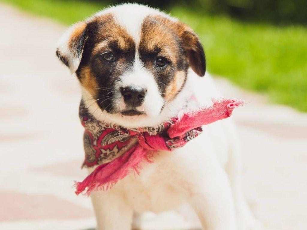 Adopta un perrito en Fundación FEVA