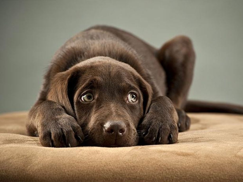 Consiente a tu perrito en Pet Society Boutique