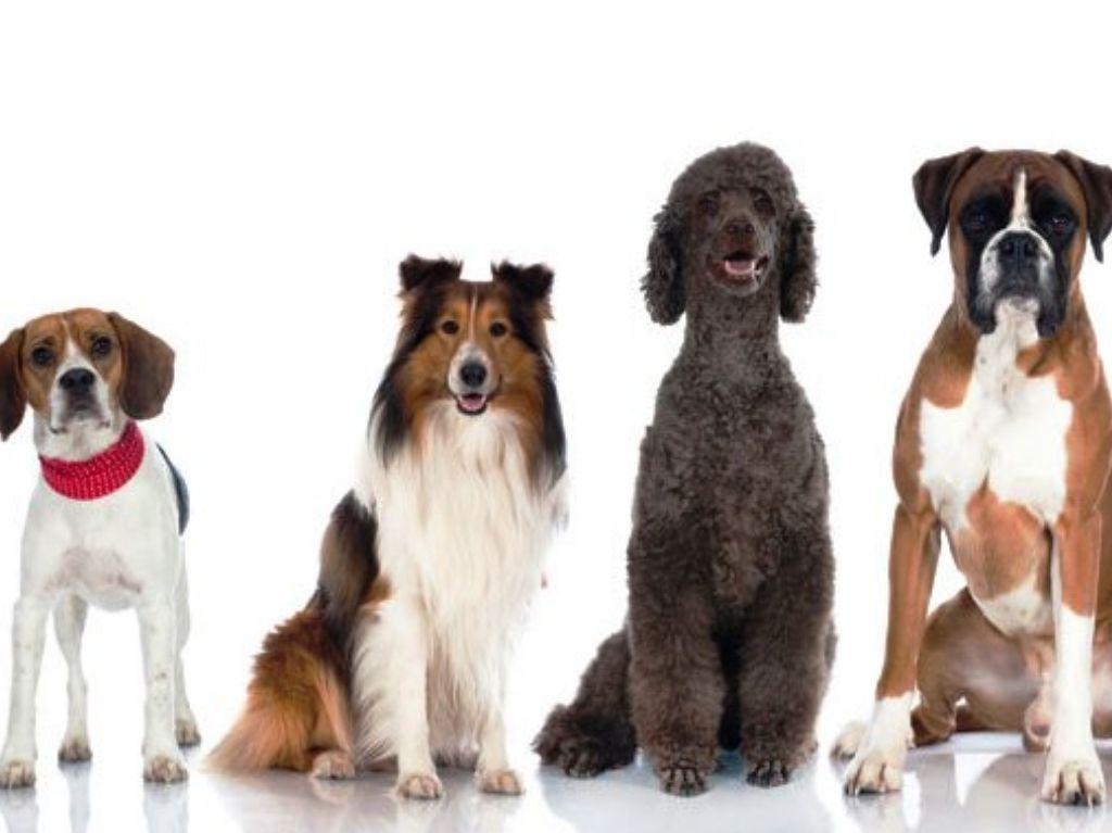 Adiestra a tu perro con Mi Perro Educado