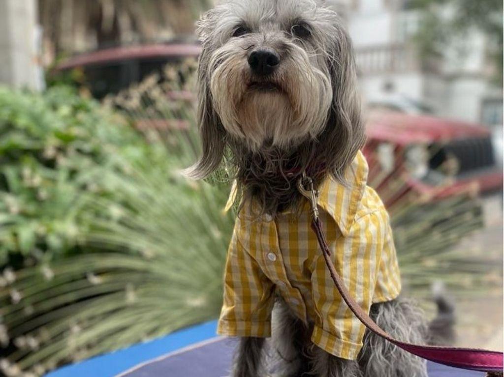 Productos 100% mexicanos para tu mascota en Perro de Mundo