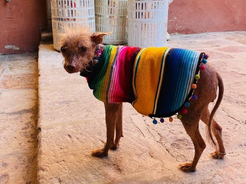 Disfraces, ponchos y más para tu mascota en Woow Guau Pets Boutique