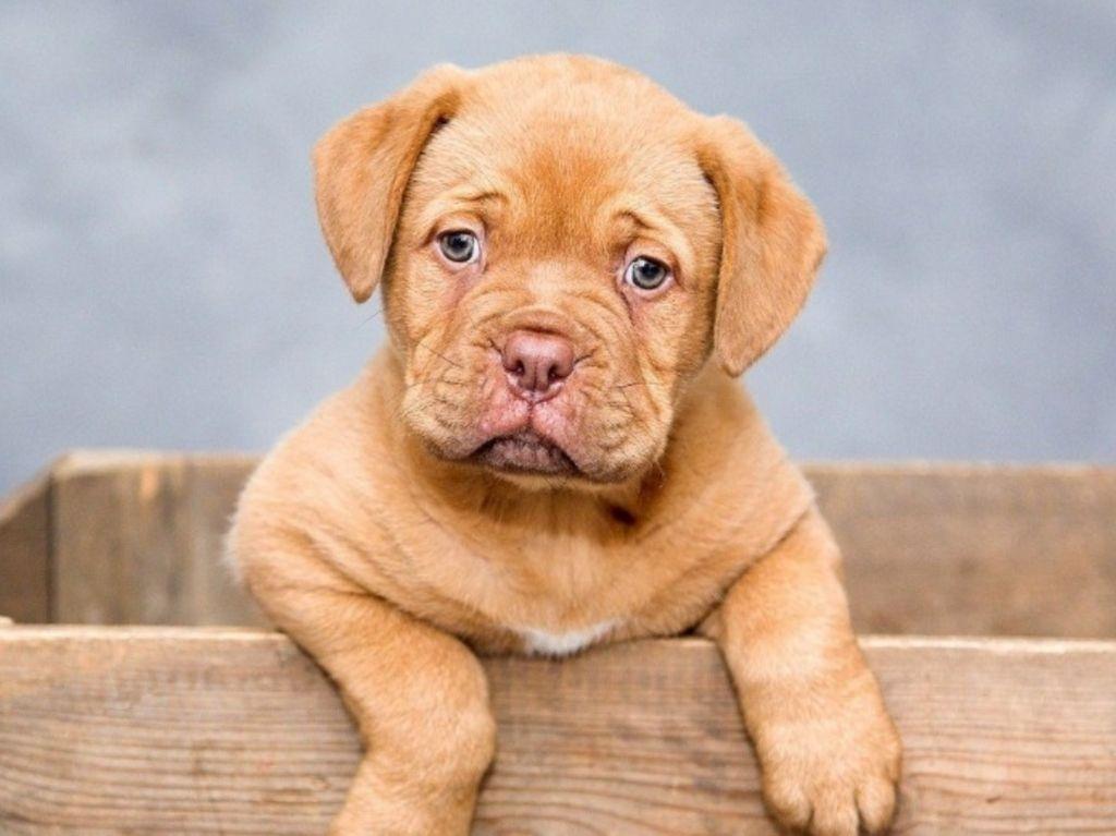 Perro Training: la mejor escuela para tu lomito